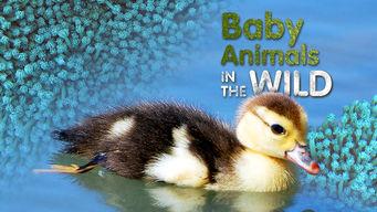 Baby Animals in the Wild: Season 1