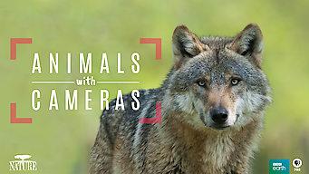Nature: Animals With Cameras: Season 1