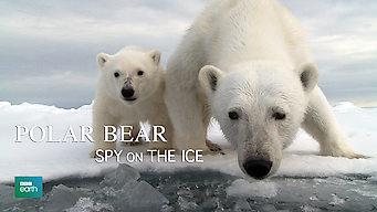 Polar Bear: Spy on the Ice: Season 1