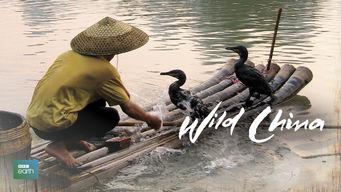 Wild China: Wild China