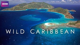 Wild Caribbean: Season 1