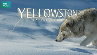 Yellowstone: Battle for Life: Battle for Life
