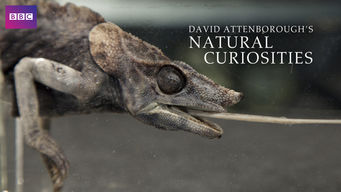 David Attenborough's Natural Curiosities: Season 4
