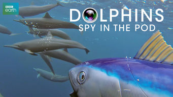 Dolphins: Spy in the Pod: Season 1