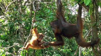 Baby Animals in the Wild: Season 1: Jungle Babies Afternoon
